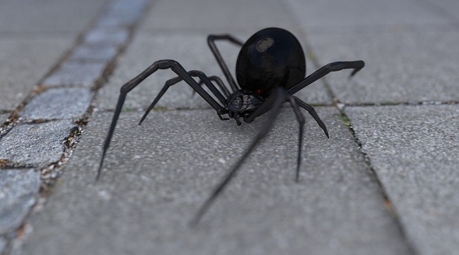 Reasons why Black Widow Spider is so dangerous